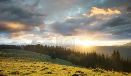 Dog on the mountain pasture during sunser. Beautiful natural landscape in the summer time
