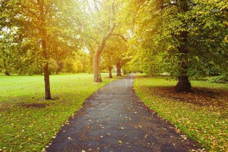 Photo pour Fond d'automne avec des arbres dans le parc - image libre de droit