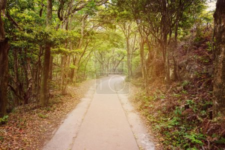 Photo for Path through the woods. Beatiful summer forest background - Royalty Free Image