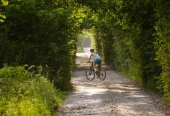 Woman rides bicycle in the beautiful green forest