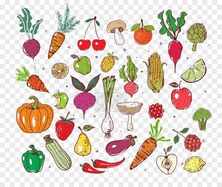 Illustration pour Doodle fruits et légumes. Illustration vectorielle d'aliments sains - image libre de droit