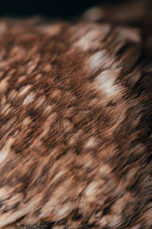 Photo pour Vue de près des plumes de chouettes sauvages - image libre de droit