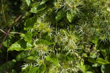 Foto de Cerrar la vista de las hojas y los cogollos verdes en el monte - Imagen libre de derechos