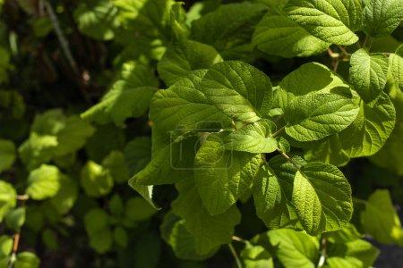 Foto de Cerrar la vista de las hojas de la planta verde con luz solar - Imagen libre de derechos