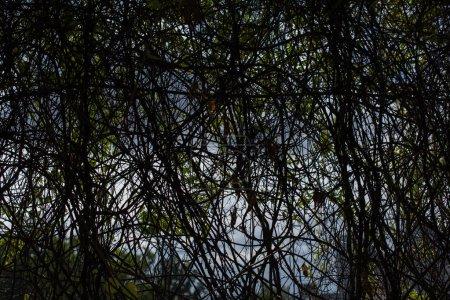 Foto de Árboles oscuros y cielo con nubes - Imagen libre de derechos