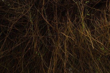 Photo pour Branches de plantes aux feuilles vertes dans la forêt - image libre de droit