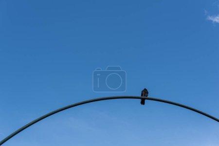 Photo pour Vue à faible angle du pigeon sur arc avec ciel bleu à l'arrière-plan - image libre de droit