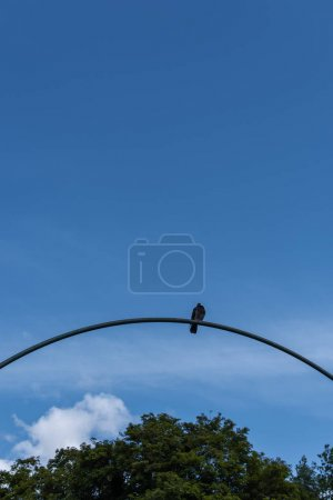 Photo for Low angle view of pigeon on arch with blue sky and trees at background - Royalty Free Image