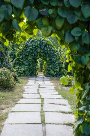 Selective focus of walkway and arches from plants in park