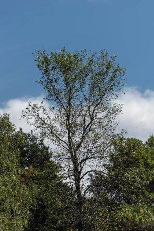 Photo pour Arbres à feuilles vertes et ciel nuageux en arrière-plan - image libre de droit