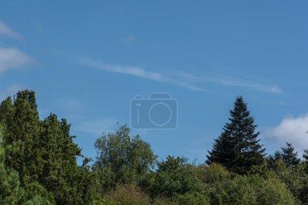 Photo pour Arbres à feuilles vertes et ciel bleu à l'arrière-plan - image libre de droit