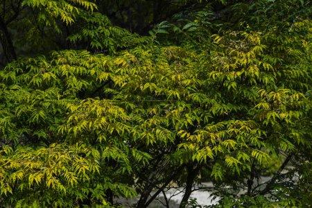 Foto de Treos con hojas verdes en el parque en verano - Imagen libre de derechos