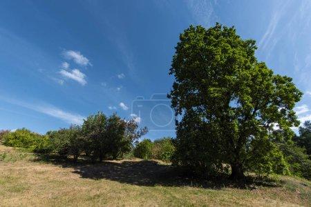 Photo pour Des arbres verts avec de la lumière solaire et un ciel bleu avec des nuages en arrière-plan - image libre de droit
