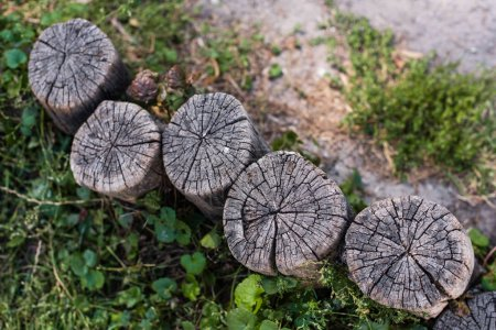 Photo pour Vue de dessus des souches de bois et des feuilles vertes sur le sol - image libre de droit