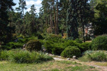 Photo pour Arbustes et arbres sur herbe verte dans le parc d'été - image libre de droit