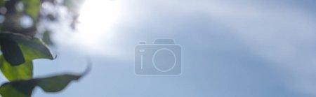 Photo pour Vue panoramique de feuilles vertes au soleil avec un ciel bleu en arrière-plan - image libre de droit