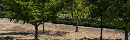 Photo pour Vue panoramique des arbres à feuillage persistant dans le parc - image libre de droit