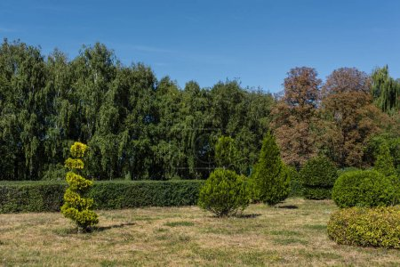 Photo for Green trees with bushes on grass and blue sky at background - Royalty Free Image