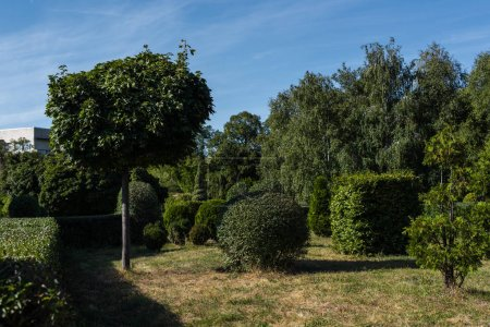 Photo pour Trees and bushes on grass in park with blue sky at background - image libre de droit