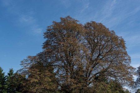 Foto de Árboles tumorales y cielo azul en segundo plano - Imagen libre de derechos