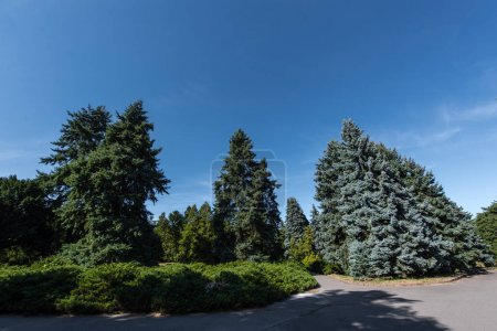 Photo for Fir trees and green bushes on walkway with blue sky at background - Royalty Free Image