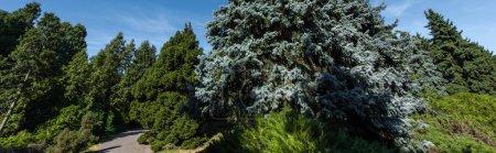 Photo pour Sapins et passerelle avec ciel bleu en arrière-plan, vue panoramique - image libre de droit