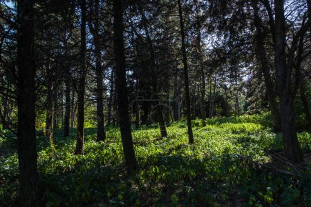 Photo pour Trees and green grass with sunlight in forest - image libre de droit
