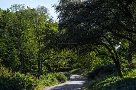 Photo pour Passerelle entre les arbres avec feuillage vert dans le parc - image libre de droit
