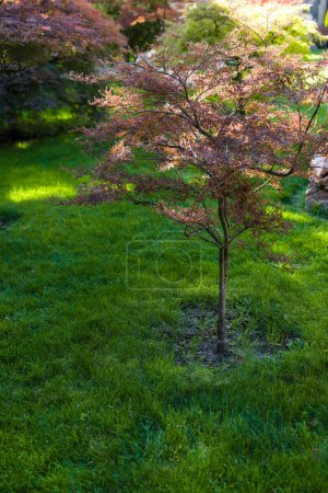 Photo pour Autumnal trees with sunlight on green grass of lawn - image libre de droit