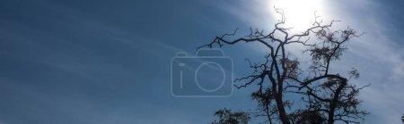 Photo pour Arbre avec branches sèches et ciel bleu avec nuages, photo panoramique - image libre de droit