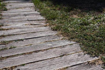 Foto de Caminata desde los tablones de madera y la hierba verde - Imagen libre de derechos