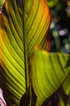 Photo for Close up view of green leaves with red lines - Royalty Free Image