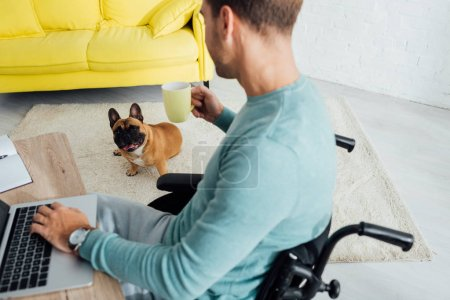 Freelancer in wheelchair with laptop and cup looking at french bulldog in living room