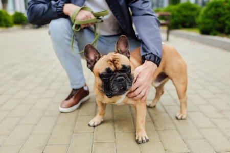 Photo pour Vue croustillante d'un homme caressant un chien-taureau français sur un trottoir - image libre de droit