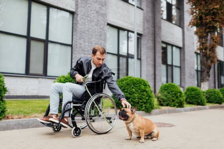 Disabled man attaching leash to french bulldog on urban street