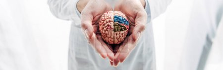 Photo for Panoramic shot of doctor holding model of brain in clinic - Royalty Free Image