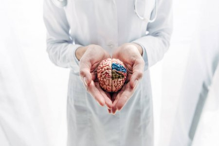 Photo for Cropped view of doctor in white coat holding model of brain in clinic - Royalty Free Image