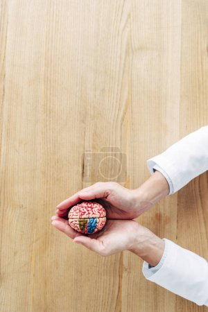 Photo for Cropped view of doctor holding model of brain in clinic - Royalty Free Image
