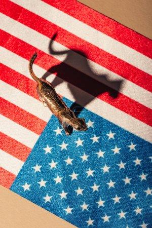 Photo pour Vue de haut du tigre doré avec l'ombre sur le drapeau américain, concept de bien-être des animaux - image libre de droit