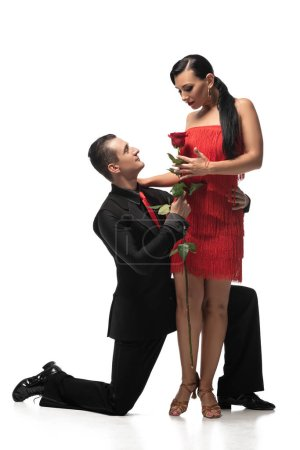 Photo for Sensual, elegant tango dancer standing on knee and gifting red rose to beautiful partner on white background - Royalty Free Image