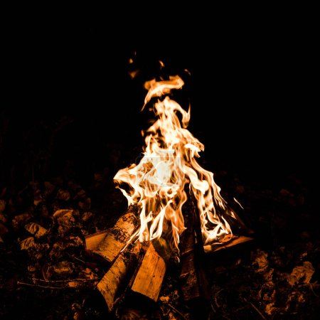 Photo for Logs burning in camp fire in darkness - Royalty Free Image