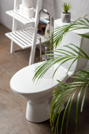 Photo for Selective focus of palm tree and toilet bowl near rack with toilet paper - Royalty Free Image
