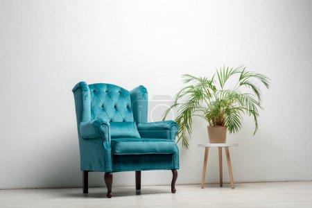 eleganter velourblauer Sessel mit Kopfkissen in der Nähe einer grünen Pflanze