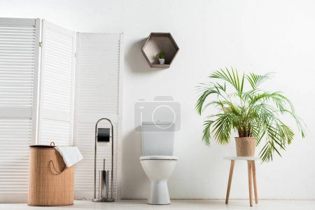 interior of white modern bathroom with toilet bowl near folding screen, laundry basket, palm tree and toilet brush