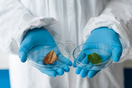 Photo for Cropped view of biologist in latex gloves holding leaves in lab - Royalty Free Image