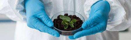 Photo pour Plan panoramique de biologiste en gants de latex tenant des feuilles en laboratoire - image libre de droit