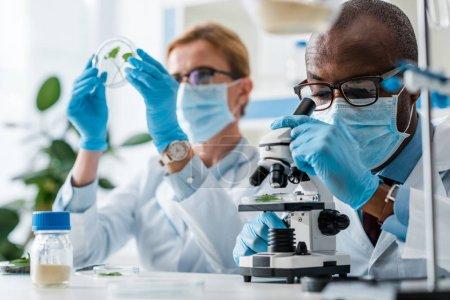 Photo pour Foyer sélectif du biologiste afro-américain utilisant le microscope et son collègue regardant les feuilles sur fond - image libre de droit