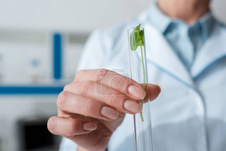 cropped view of biologist holding test tube with leaves