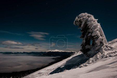 Photo pour Vue panoramique des montagnes et des pins couverts de neige dans un ciel sombre en soirée - image libre de droit