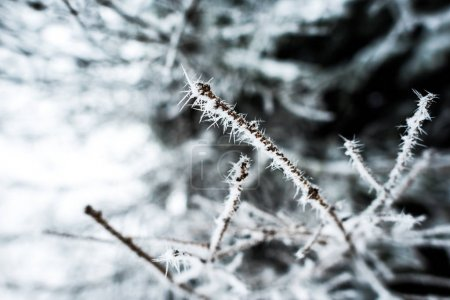 Photo for Close up view of branches of tree covered with ice in winter - Royalty Free Image